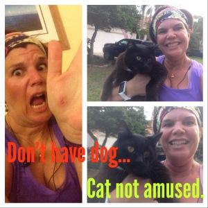Tubby the Stunt Cat